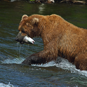 Alaskan Fishing Trips
